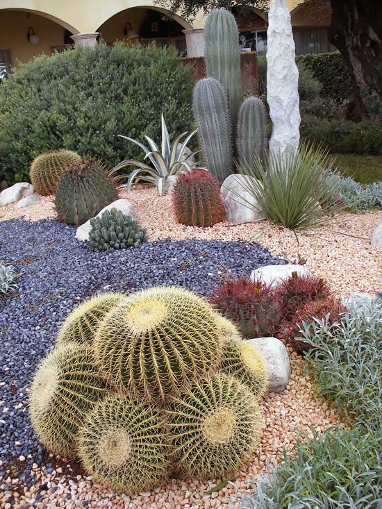 Piante grasse giardino roccioso uf57 regardsdefemmes - Piante x giardino ...